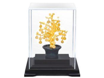 Trồng cây phát tài thu hút vượng khí mang đến may mắn cho gia chủ